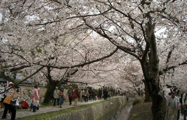 京都~桜~