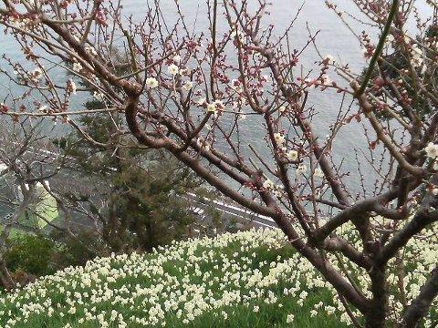 一足早く春を見つけました!
