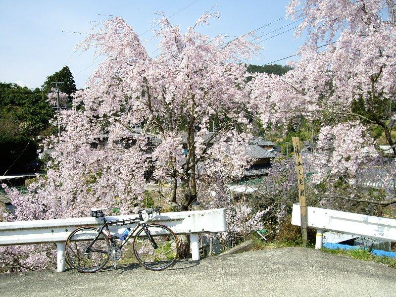春を満喫?サイクリング