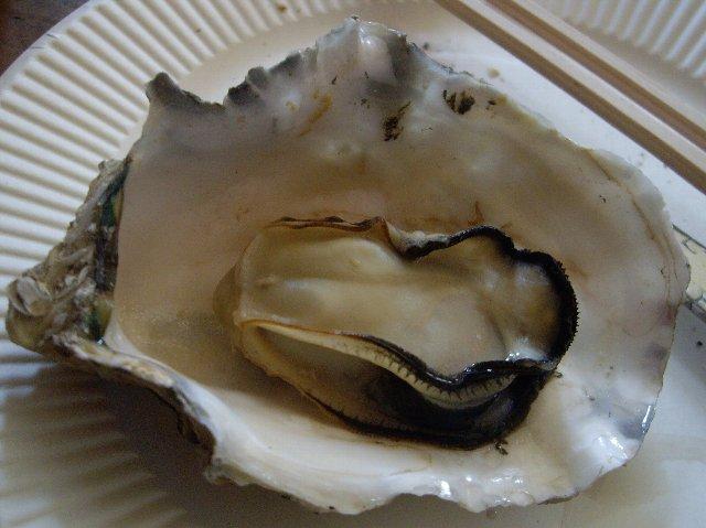 【業務連絡】牡蠣食い放題ツーリング