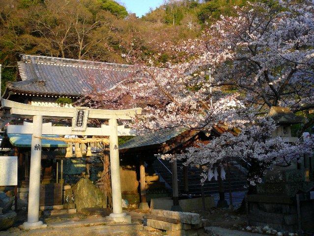 近場の桜③