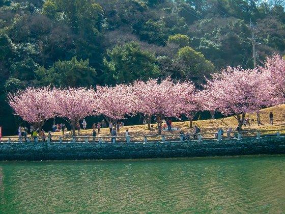 春爛漫のDNS日