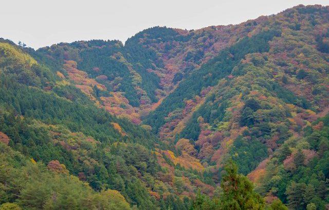 阿讃の山へ