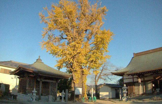 ジテツウの風景