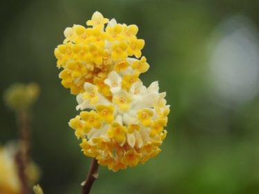 春爛漫~季節の花を愛でに~
