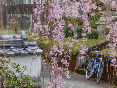 近場で季節の花巡り