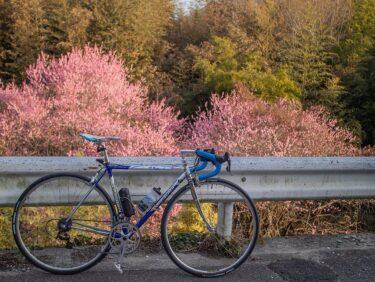 梅に桜、春近し