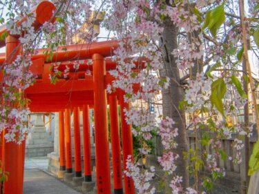 ジテツウ途中の桜、まだ残ってた!